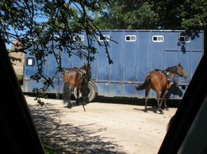 Horses by lorry