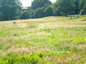 Unmown lawn HH