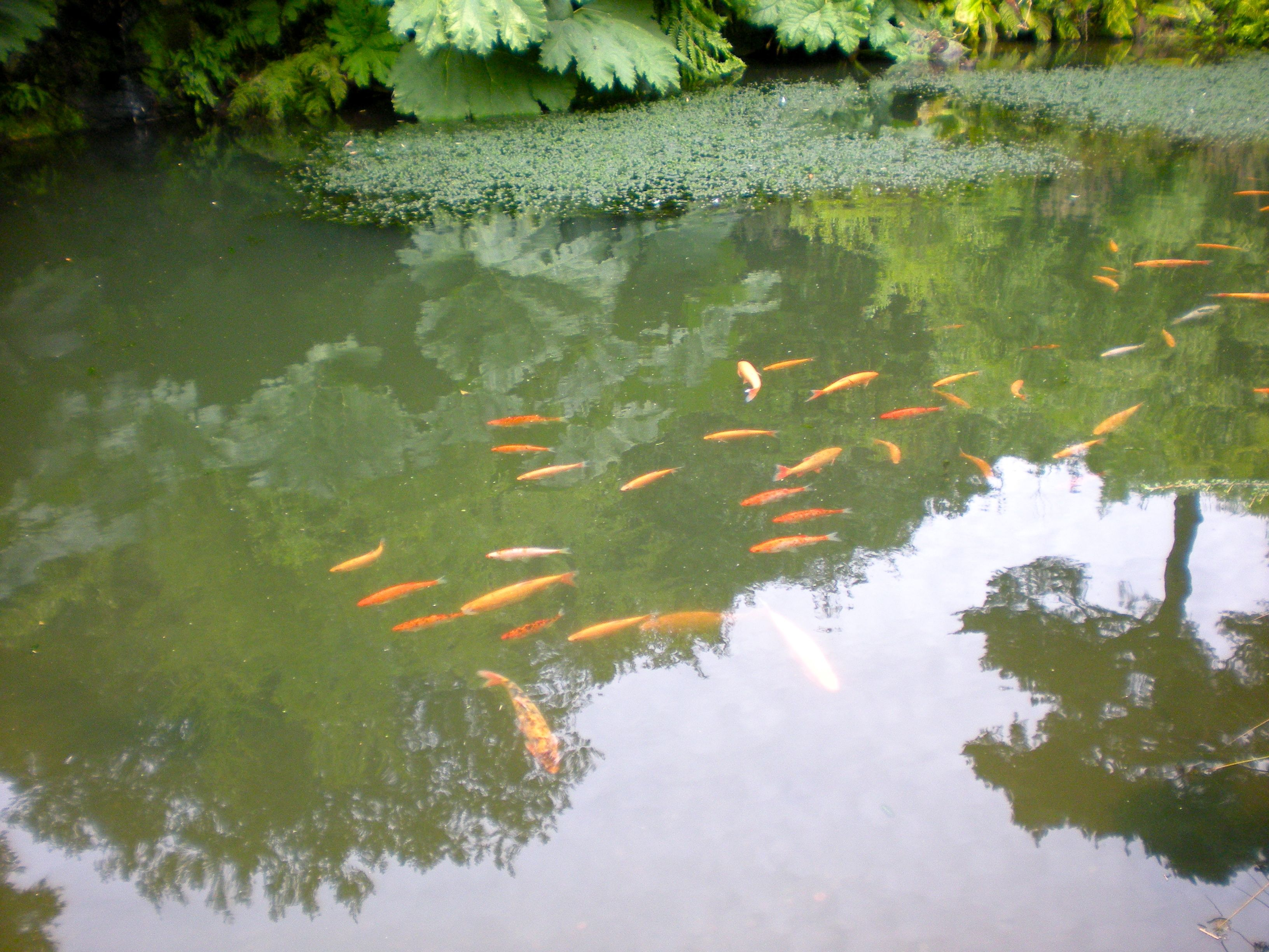 Championing churchill s chartwell hey what for Best pond plants for goldfish